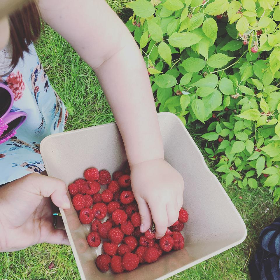 A child picks berries places them in a container