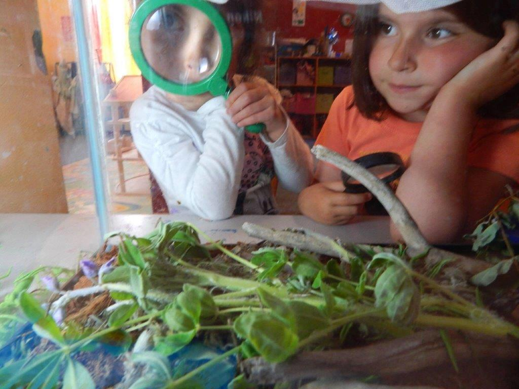 Children look at a terrarium with magnifying glasses
