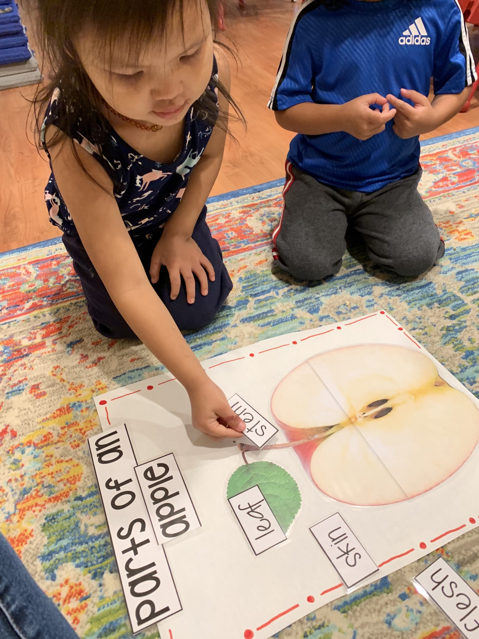 Children match words with parts of an apple